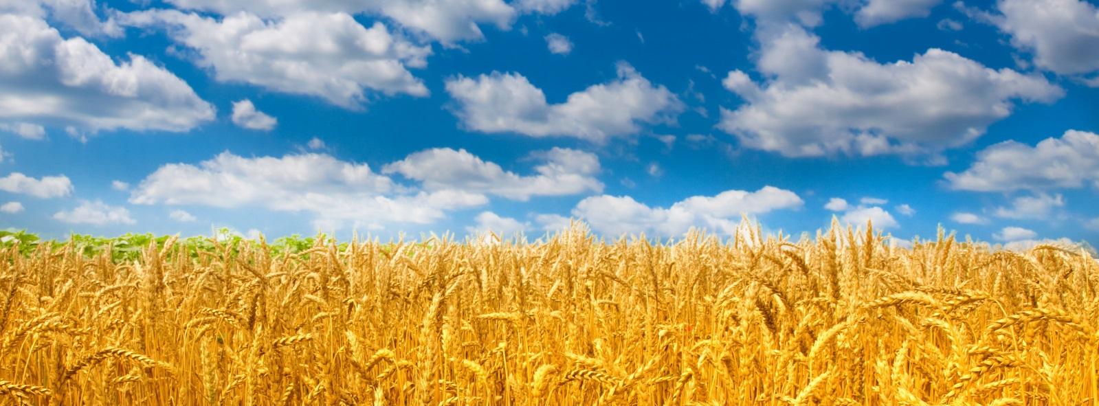 30 лет на рынке сельского хозяйства